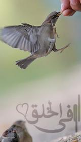 الصورة الرمزية زياد بن عبدالمحسن